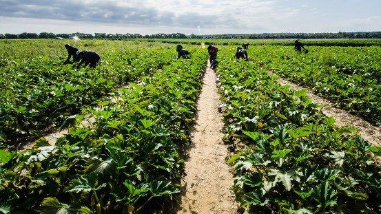 Agriculture Leadership Awards 2019 Announced